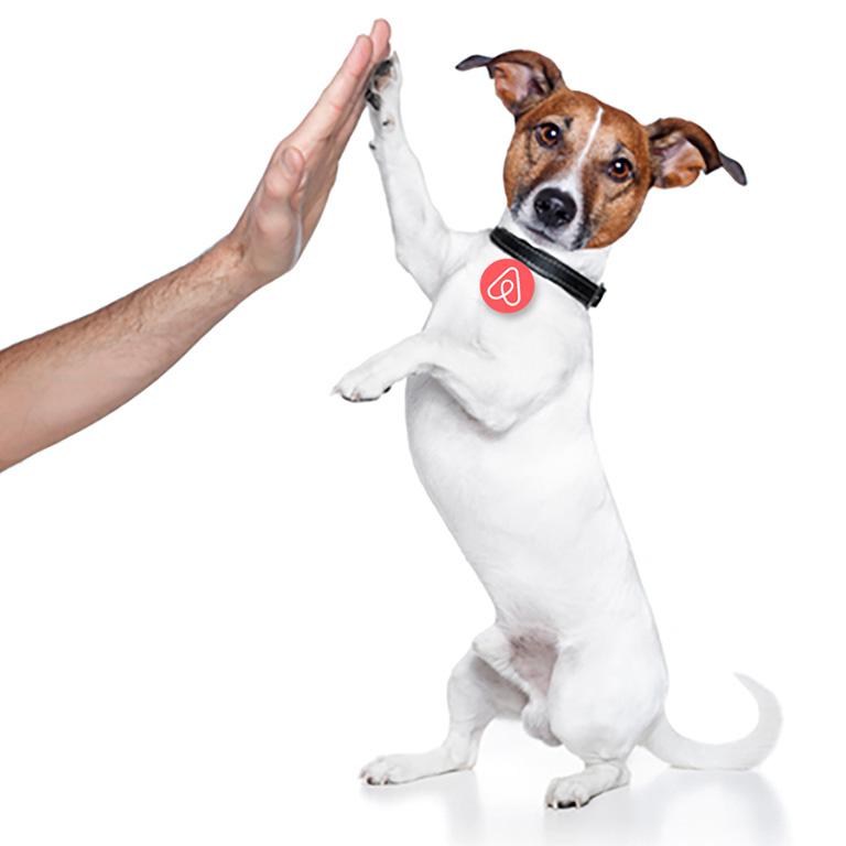 коллаж изображение: собака с медалью - знаком airbnb, дающая лапу, как символ помощника_
